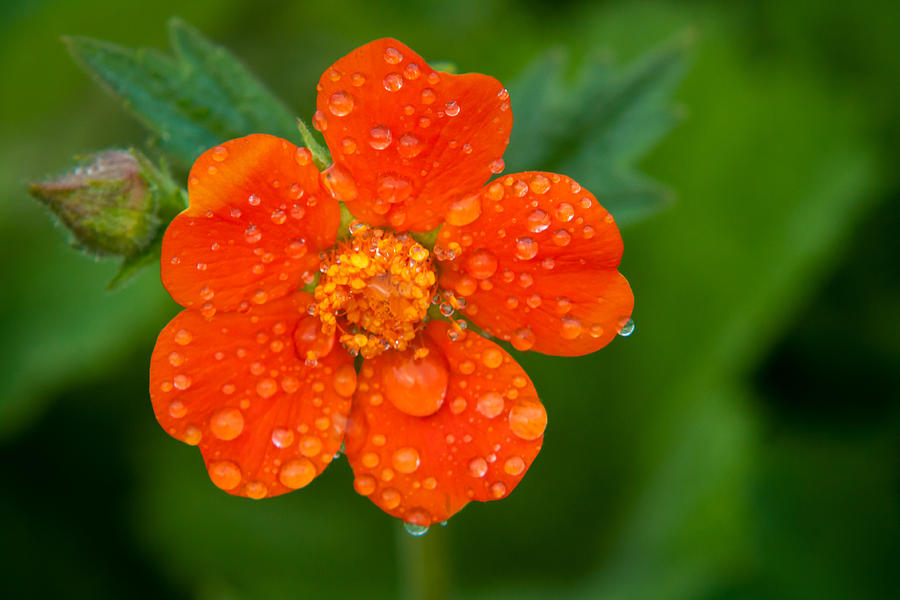 Close-up Photograph - Refreshing by Matt Dobson