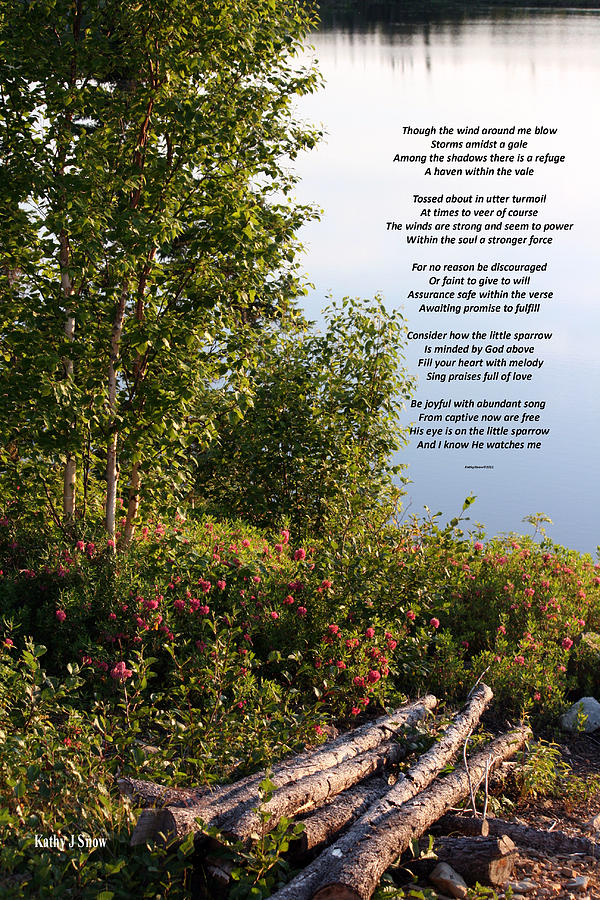 Poetry By Kathy With Beautiful Young Birch On A Little Lake Photograph - Refuge by Kathy J Snow