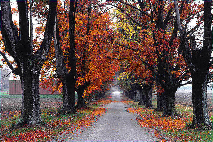 Kentucky Photograph - Reids Orchard Drive by Wendell Thompson