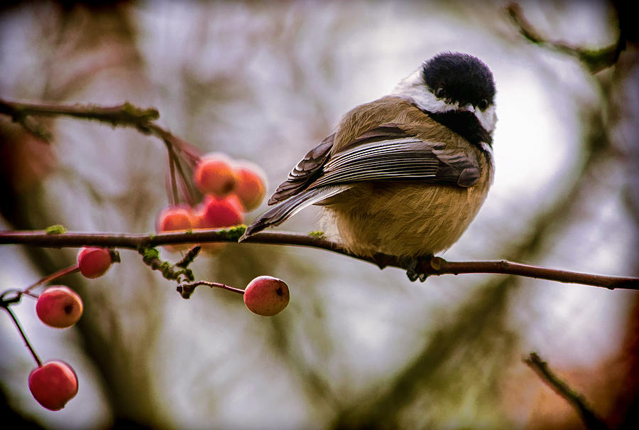 Nature Photograph - Relationships Are Like Birds by Jordan Blackstone