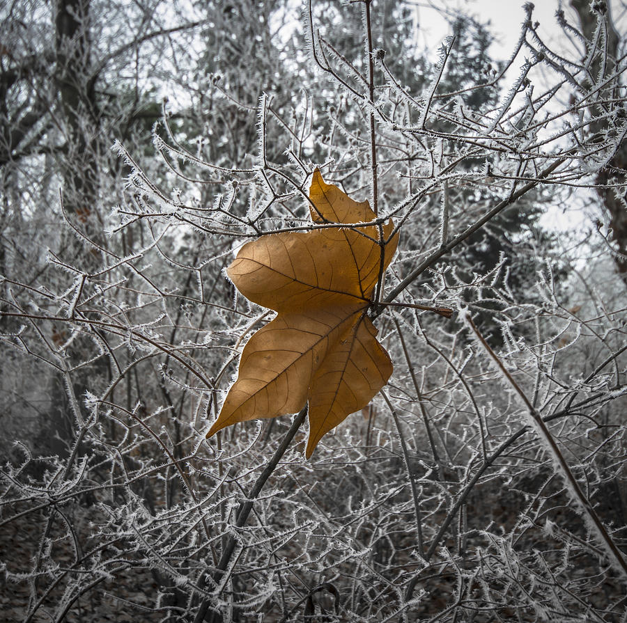 Winter Autumn Leaf Photograph - Remained by Akos Kozari