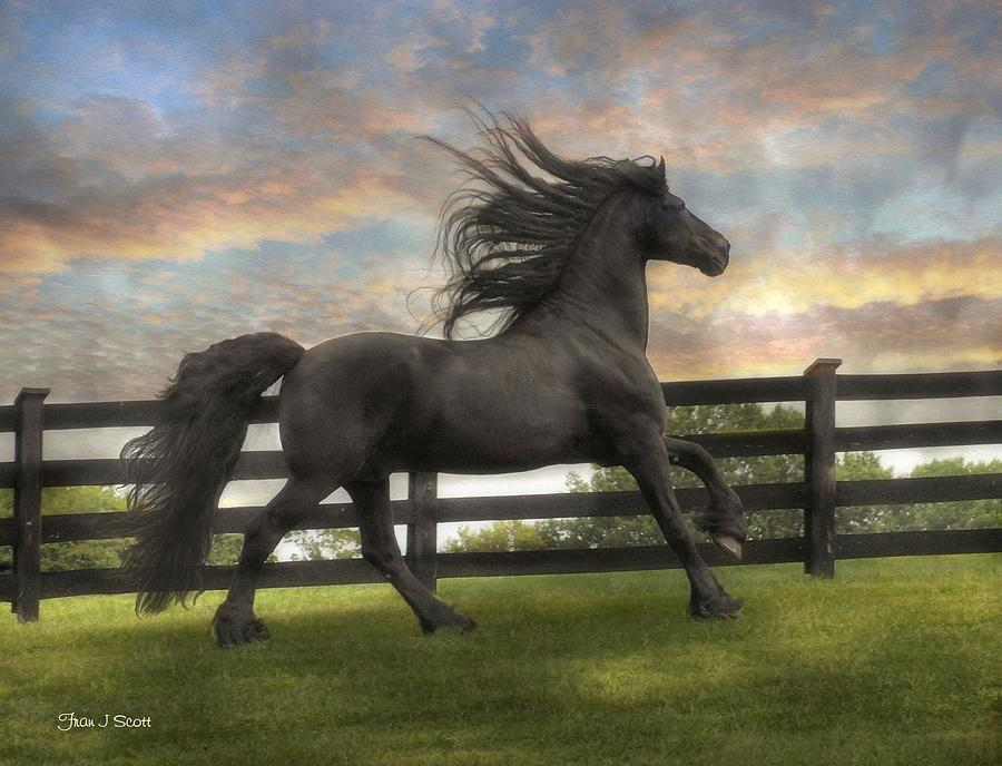 Friesian Photograph - Remains Of The Day by Fran J Scott