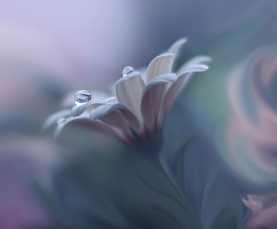 Aesthetic Photograph - Remake... by Juliana Nan