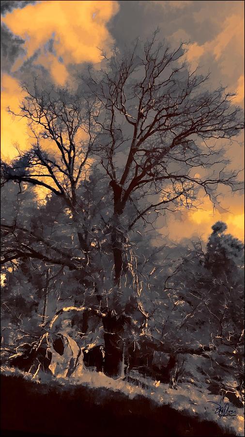 Rembrandt S Tree Photograph By Douglas Moorezart