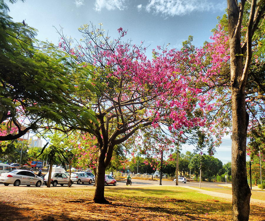Tree Photograph - Remember This Place by Beto Machado