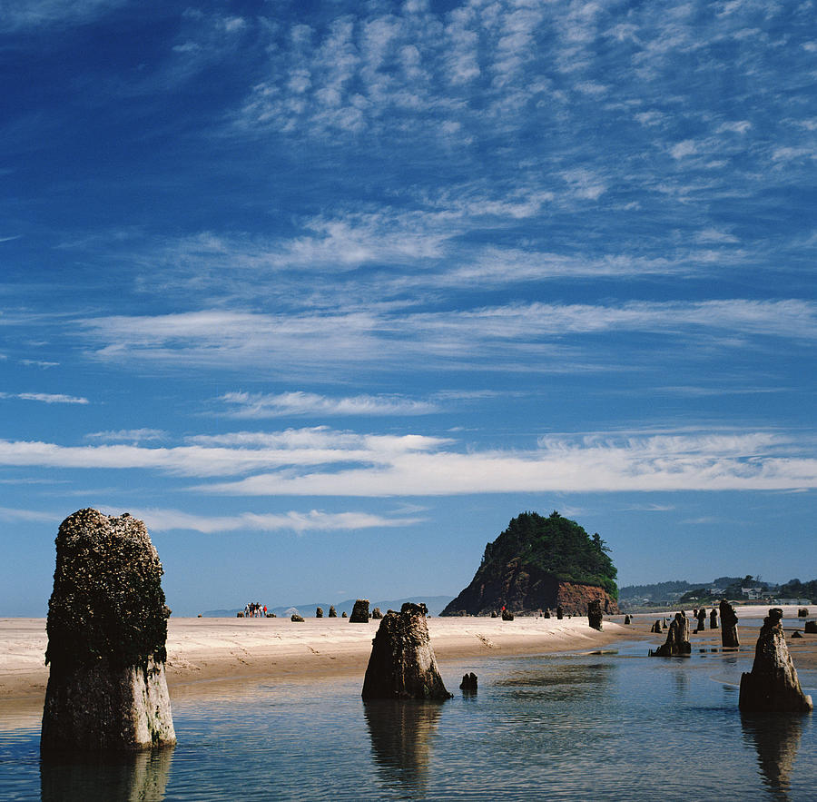 Remnants Of Forest At Oregon Coast Photograph by Danielle D. Hughson