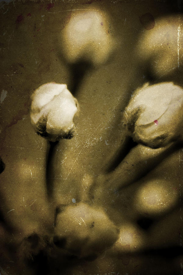 Flowers Photograph - Renewal Of Life by Timothy Bischoff