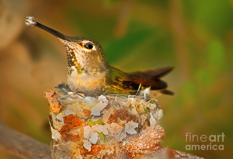 Humming Birds  - Repairing  by Robert Bales