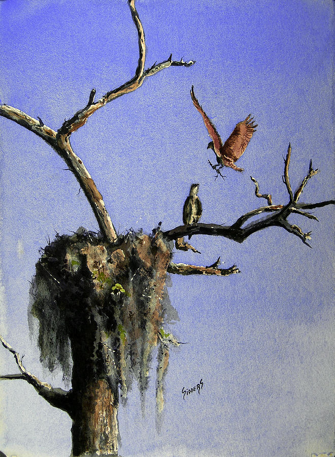 Eagle Painting - Repairing The Nest by Sam Sidders