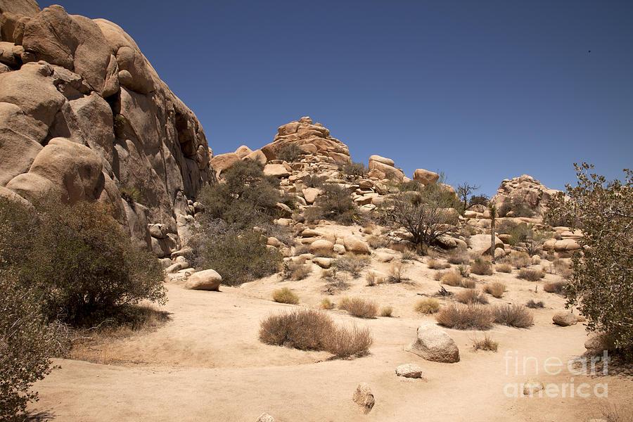 California Photograph - Repeating Yourself by Amanda Barcon