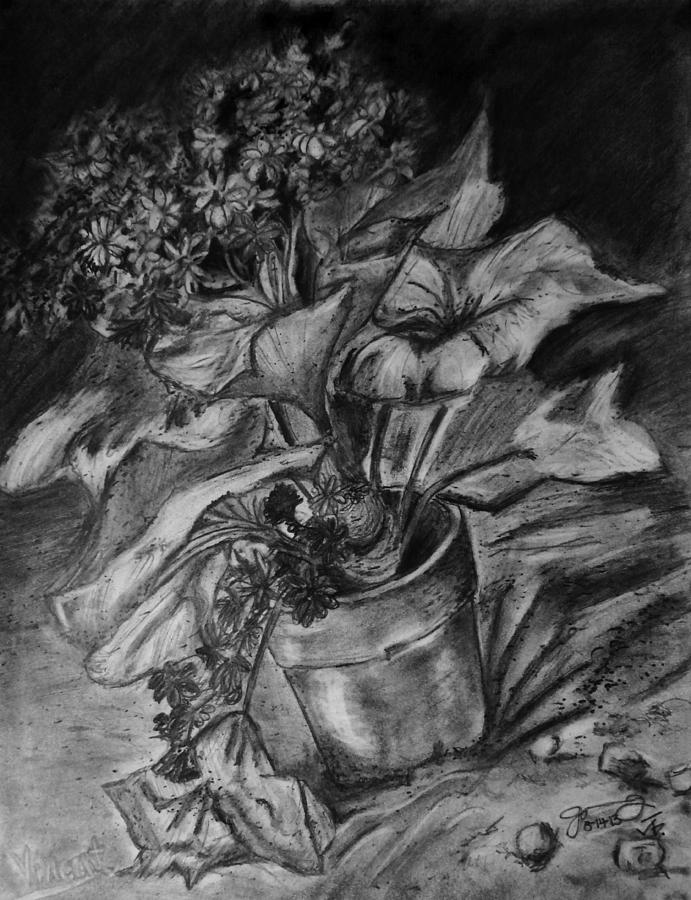 Replica Of Van Goghs Cineraria In A Flowerpot Drawing