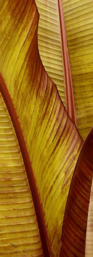 Botanical Abstract Photograph - Repose - Leaf by Ben and Raisa Gertsberg
