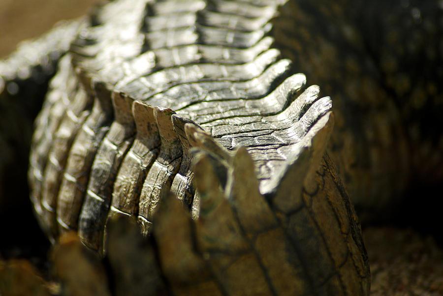 Crocodile Photograph - Reptiles brush by Stwayne Keubrick