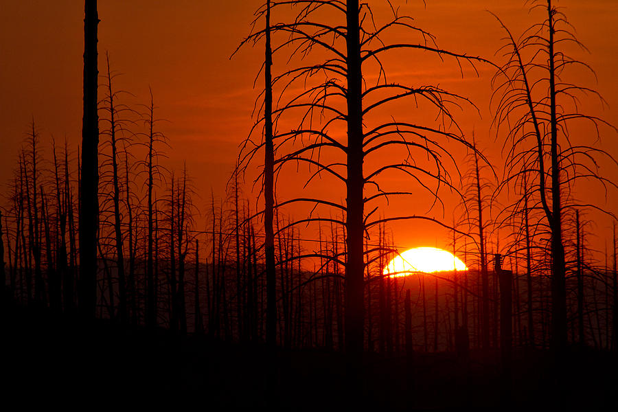 Requiem For A Forest Photograph by Jim Garrison
