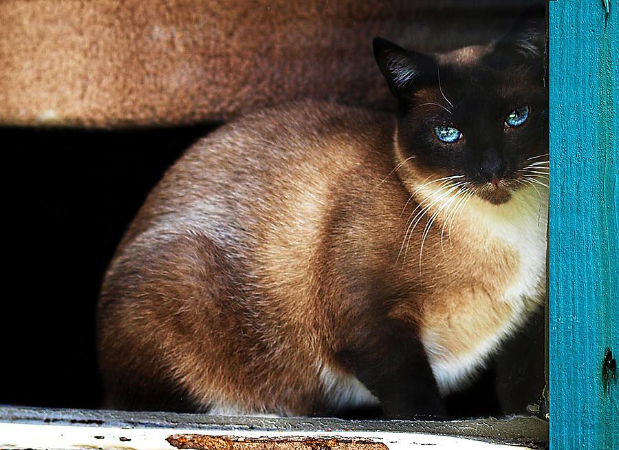 Cat Photograph - Rescue Me by Camille Lopez
