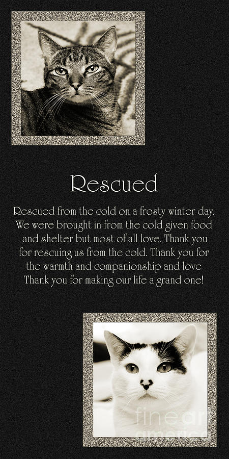 Cat Photograph - Rescued by Andee Design