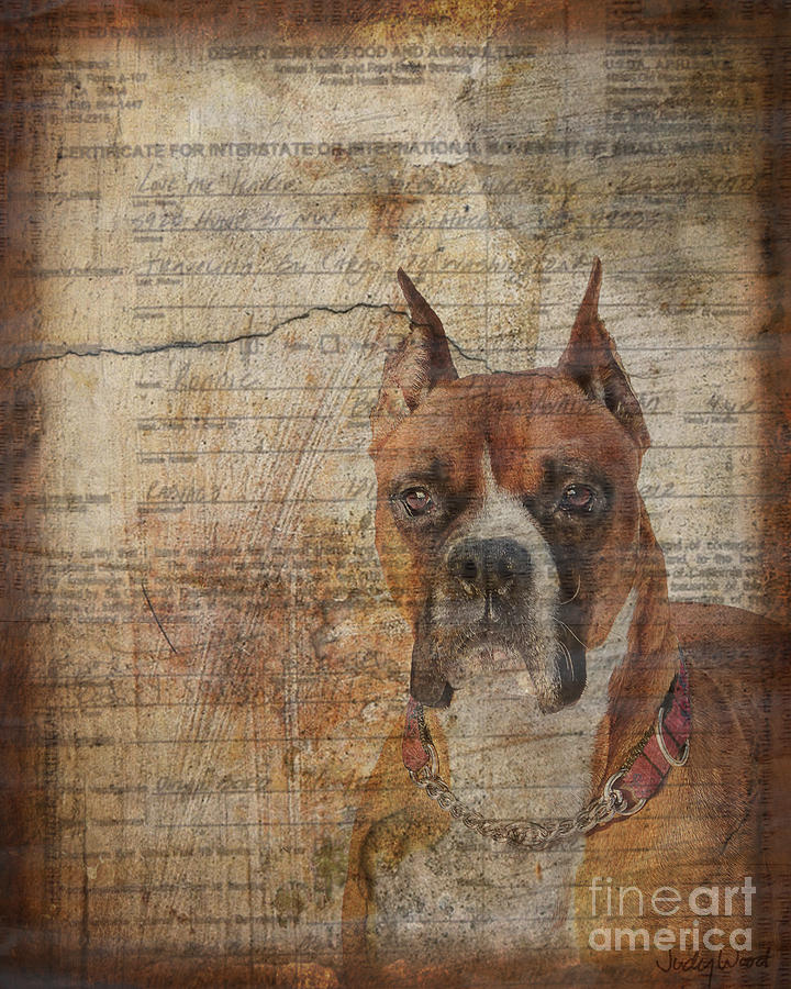 Dog Digital Art - Rescued by Judy Wood