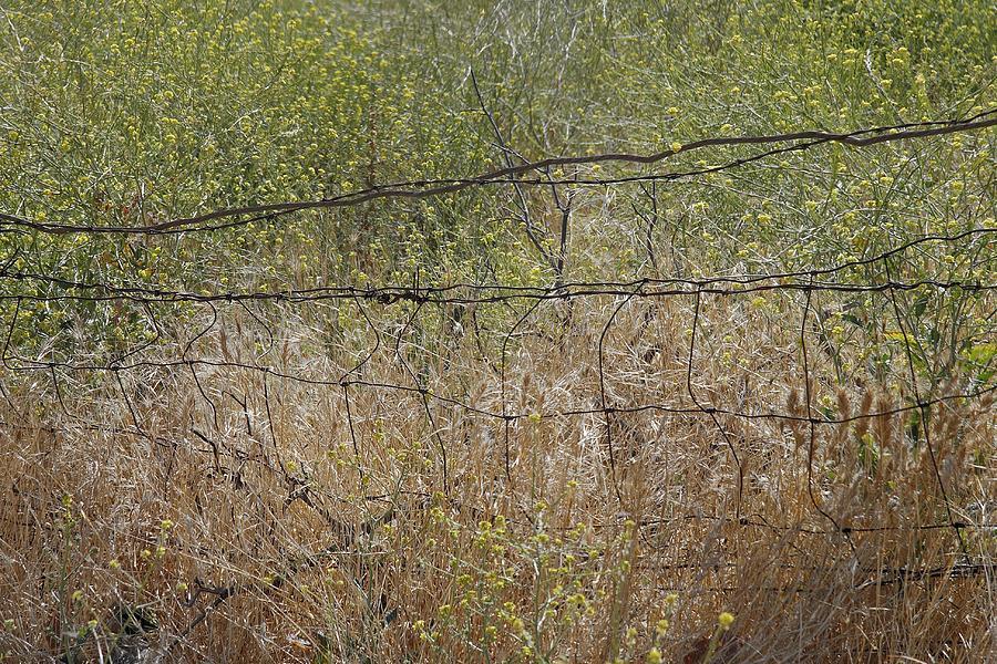 Nature Photograph - Resonate by Viktor Savchenko