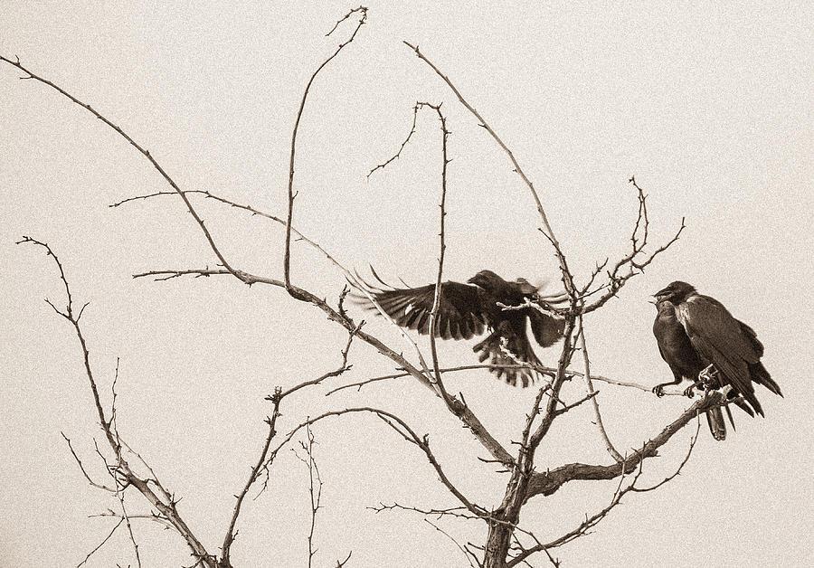 Raven Photograph - Rest Area I by Marie-Dominique Verdier