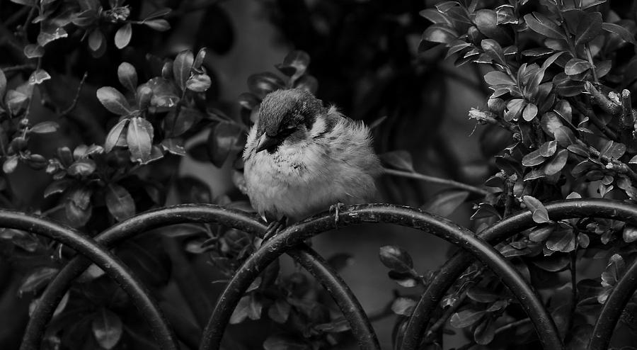 Bird Photograph - Rest For The Weary by Paul Watkins