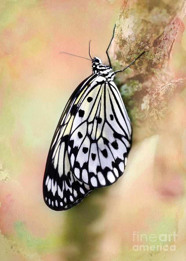 Angelic Photograph - Restful Butterfly by Sabrina L Ryan
