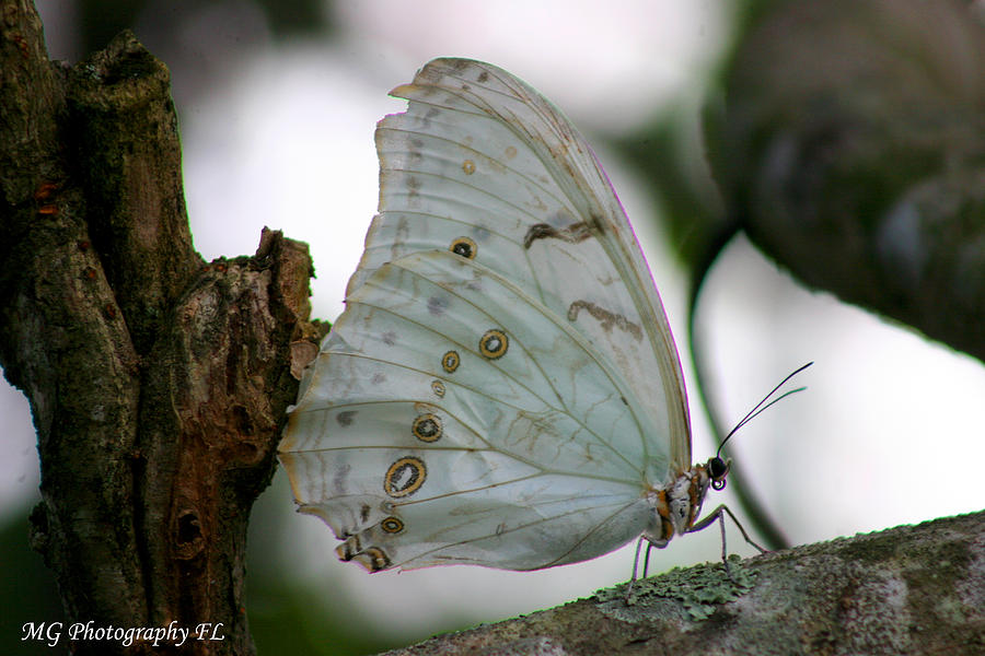 Butterfly Photograph - Resting Butterfly by Marty Gayler
