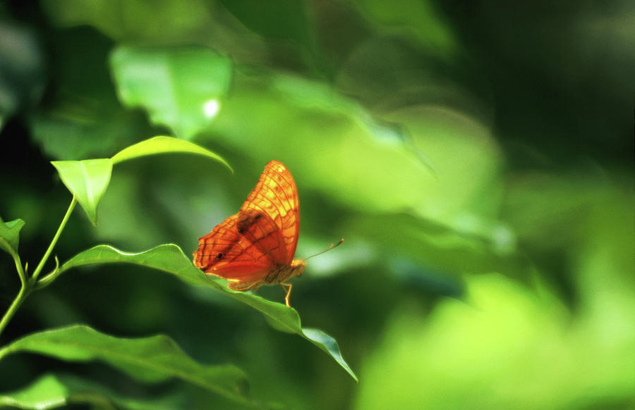 Resting Butterfly Photograph by Regis Martin