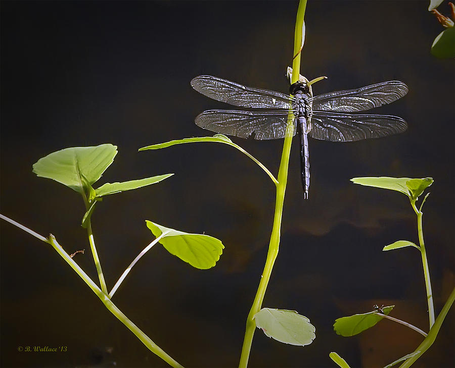 2d Photograph - Resting Dragon by Brian Wallace