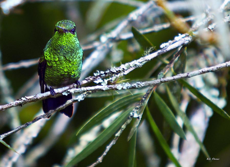 Resting Hummingbird by Bibi Rojas