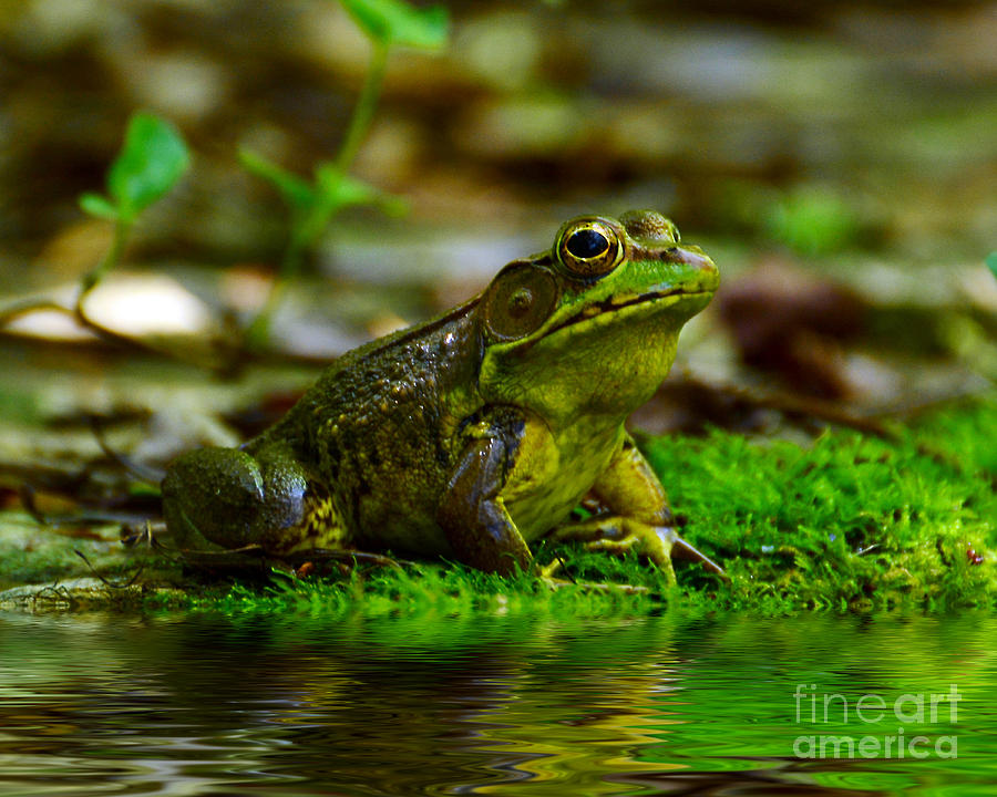 Frog Photograph - Resting In The Shade by Kathy Baccari