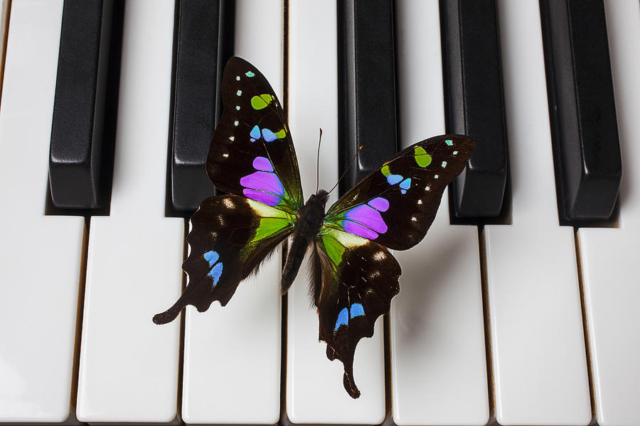 Butterfly Photograph - Resting On The Piano by Garry Gay