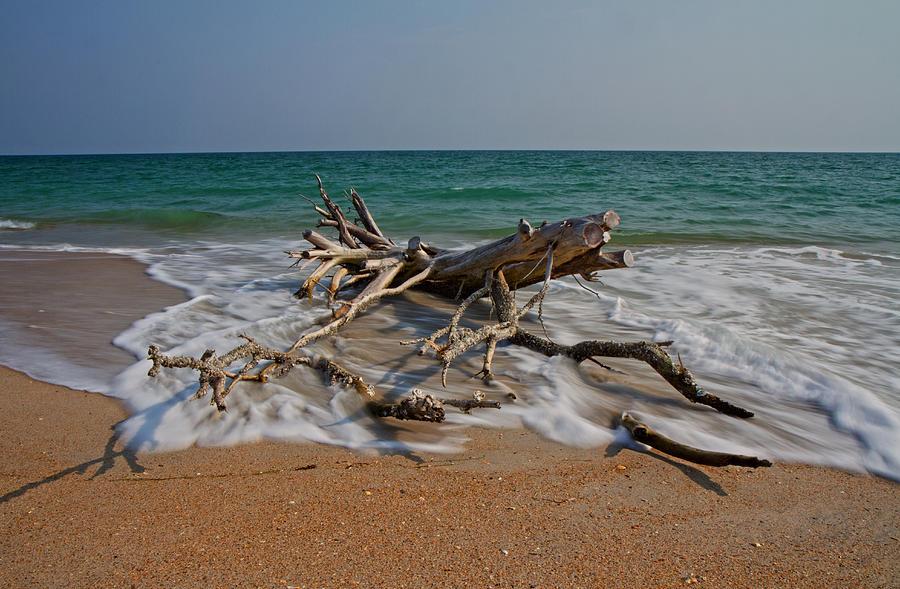Driftwood Photograph - Returning by Betsy Knapp