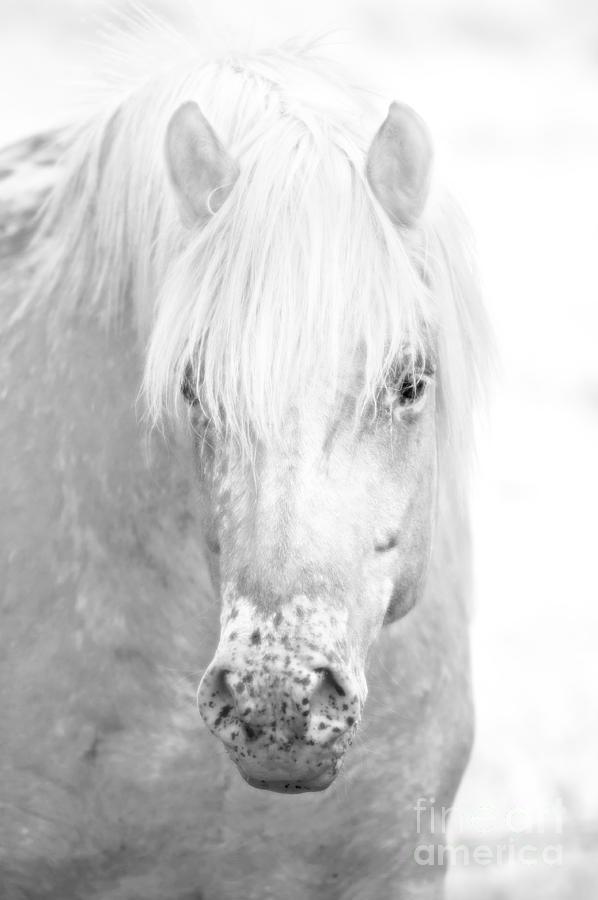 Nikon Photograph - Revelation... by Nina Stavlund