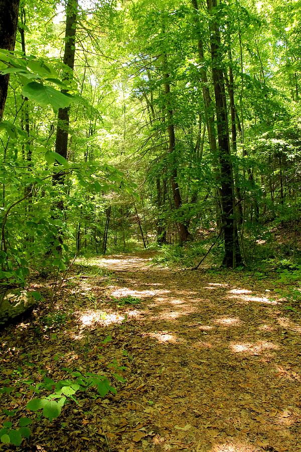 Forest Photograph - Wooded Path 16 by Robert McCulloch