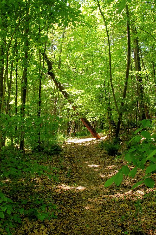 Forest Photograph - Wooded Path 17 by Robert McCulloch