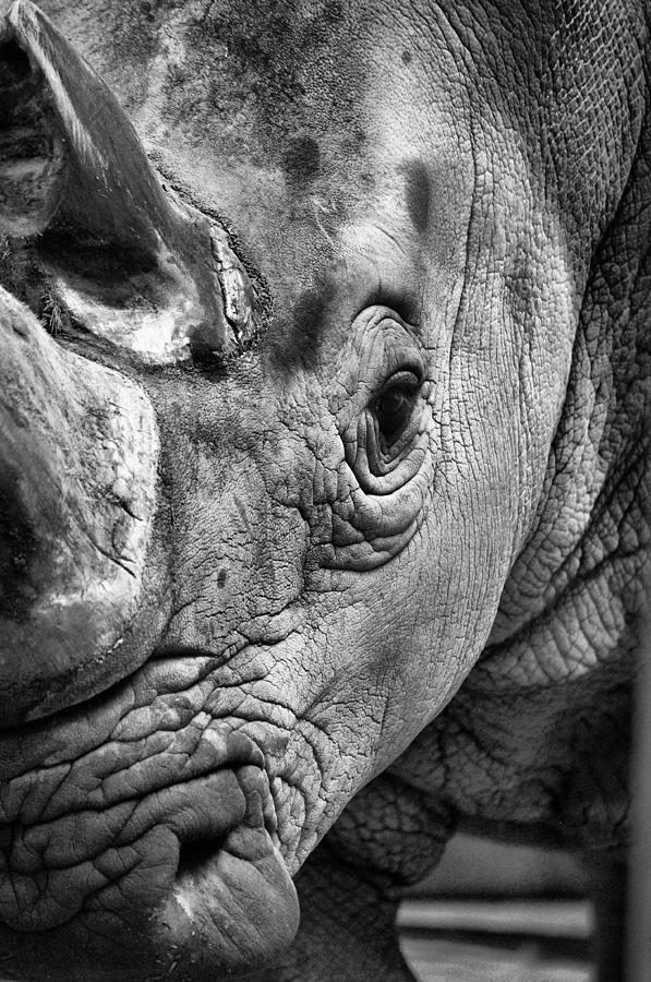 Rhino Photograph - Rhino by Emily Stauring