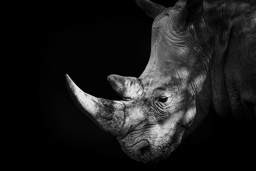 Rhinoceros Photograph by Malcolm Macgregor
