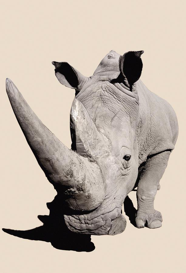 Powerful Photograph - Rhinocerosafrica by Thomas Kitchin & Victoria Hurst