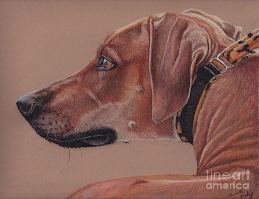 Dog Drawing - Rhodesian Ridgeback by Charlotte Yealey