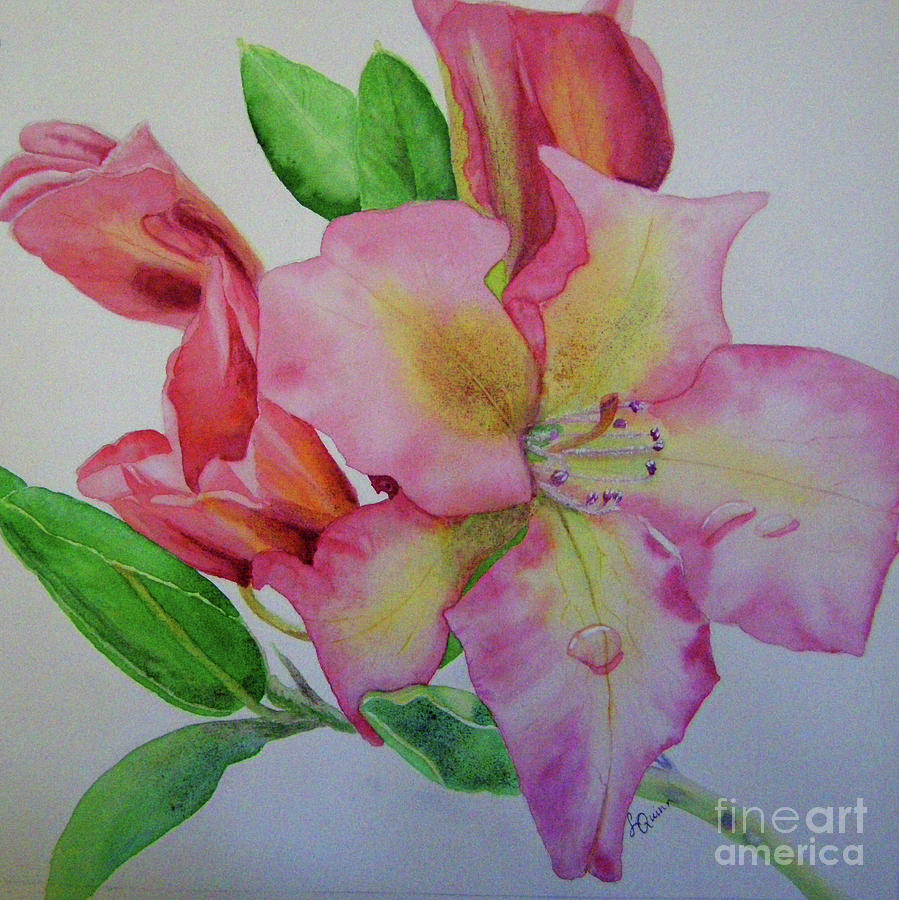 Rhodie with Dew I by Lynn Quinn