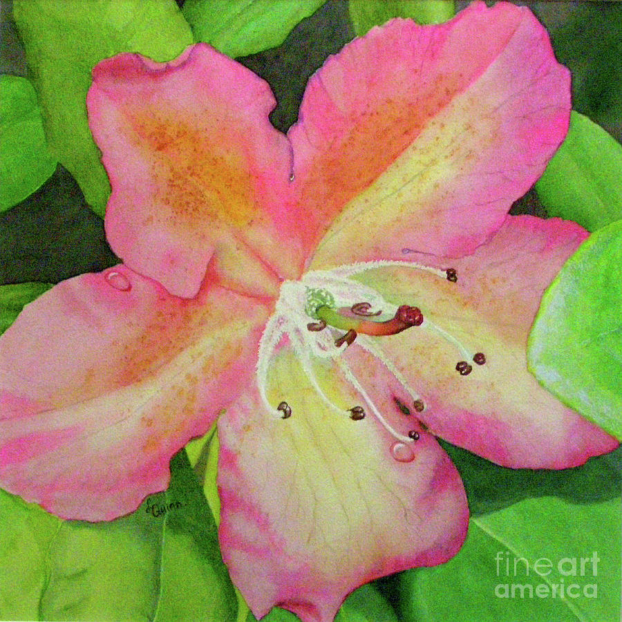 Rhodie with Dew II by Lynn Quinn