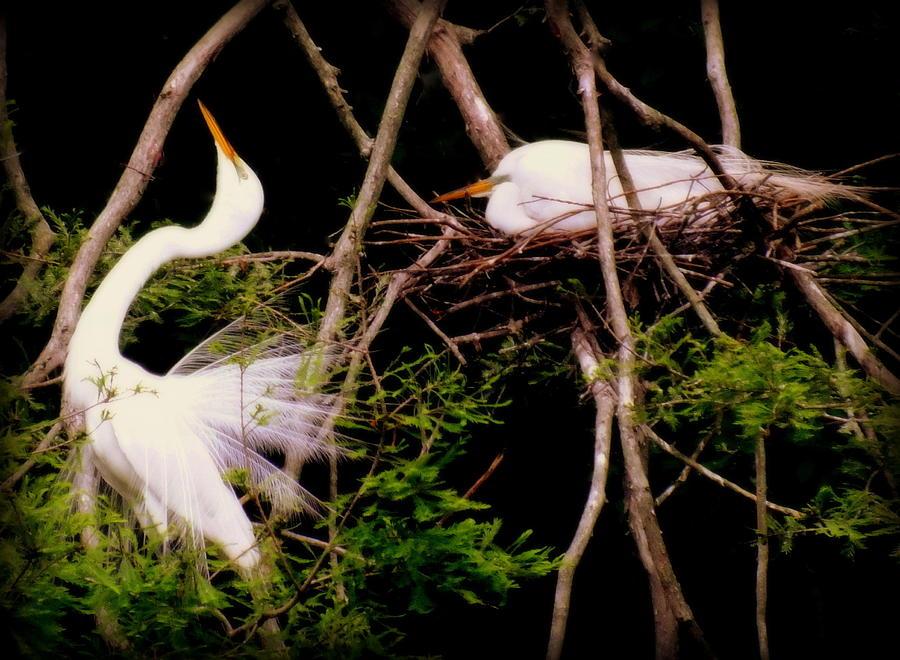 Love Birds Photograph - Rhythm Of Nature by Karen Wiles