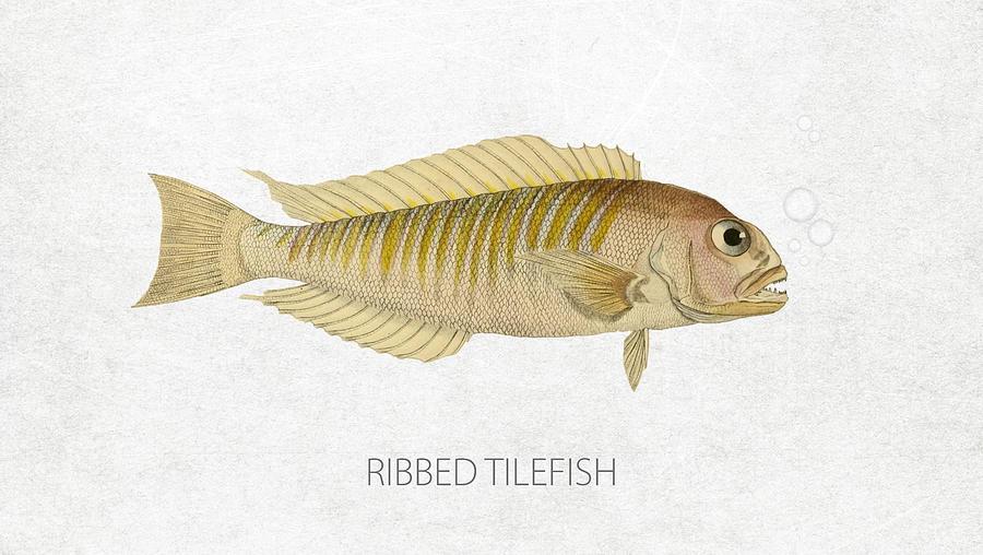 Ribbed Tilefish Digital Art