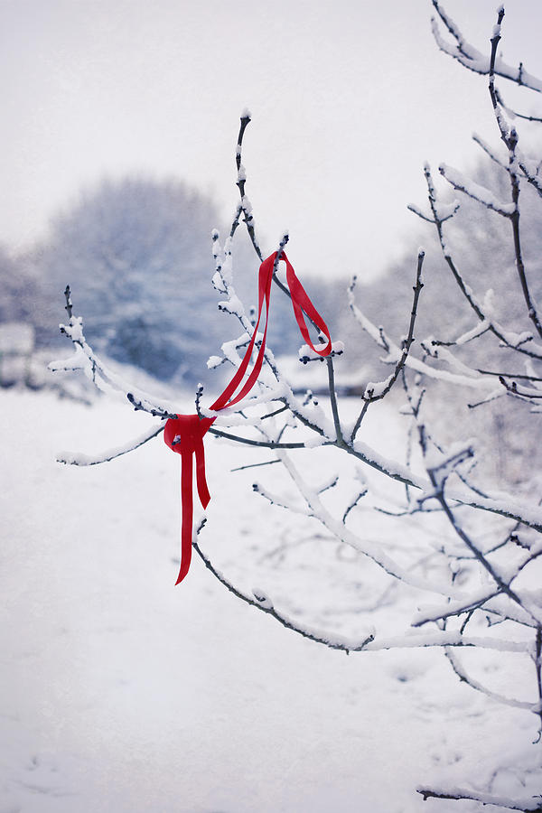 Red Photograph - Ribbon In Tree by Amanda Elwell