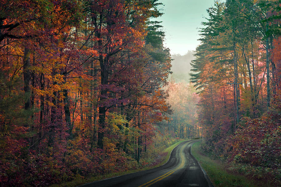 Tree Photograph - Ribbon Road by William Schmid