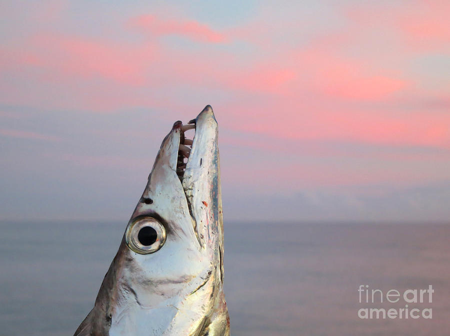 Ribbon Fish Photograph - Ribbonfish At Sunrise by Patricia Januszkiewicz