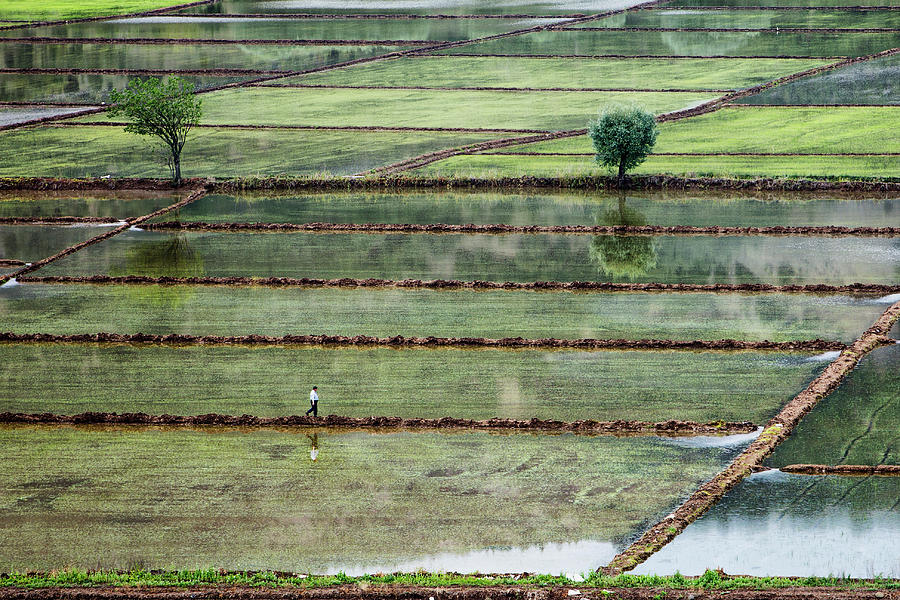 Landscape Photograph - Rice Field On Man by ??irin Akt??rk
