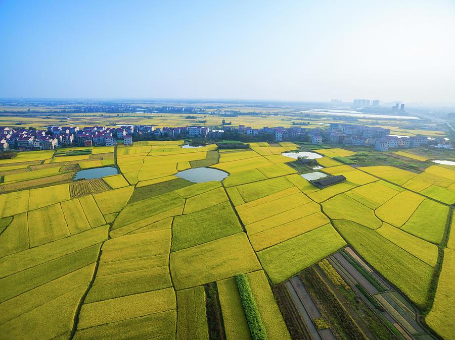 Rice Field Photograph by Yangna