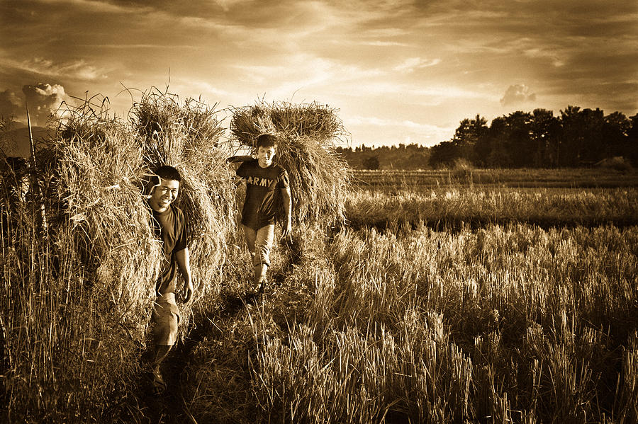 Man Photograph - Rice Harvesting by Andrea Timillero