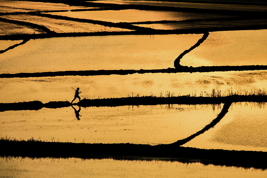 Gold Photograph - Rice by ?mm? Nisan